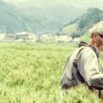Masanobu Fukuoka – la rivoluzione da un filo di paglia